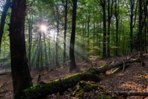 Wald Jagdschein Vorbereitung